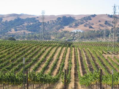wineyard_in_livermore-xin_camon1-content