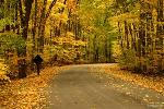 autumn-road-content