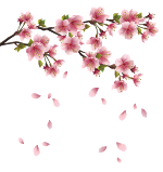 beautiful-pink-spring-branch-with-falling-petals-png-clipart