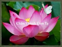 chan-thanh-cam-ta-content